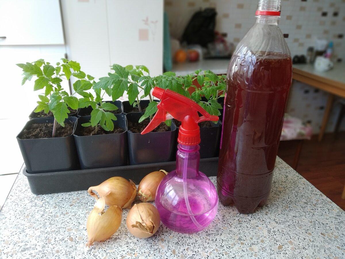 Луковая шелуха для рассады томатов и перцев